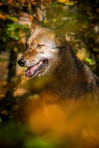 vlk 03
